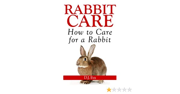 literature review on rabbit