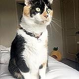 Necoichi Chirimen Hanabi Lucky Cat Collar