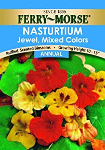 Ferry-Morse Nasturtium Jewel Mixed Colors Seeds (Annual)