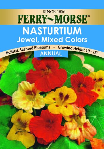 - Ferry- Morse ZF6106 Nasturtium Dwarf Jewel Mixed Colors Flower Seed
