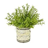 Rosemary French Label Pot