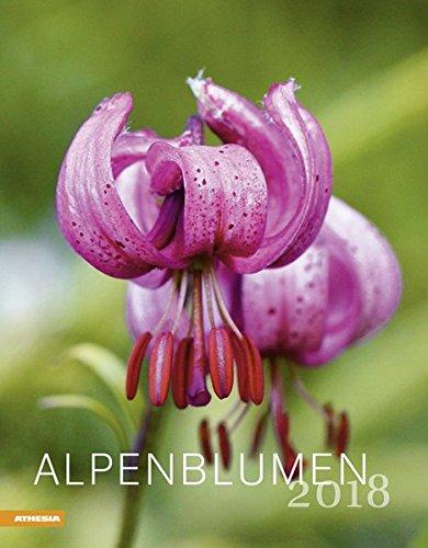 Alpenblumen Kalender 2018