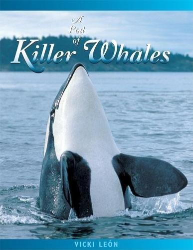 A Pod of Killer Whales: The Mysterious Life of the Intelligent Orca (Jean-Michel Cousteau Presents) ()