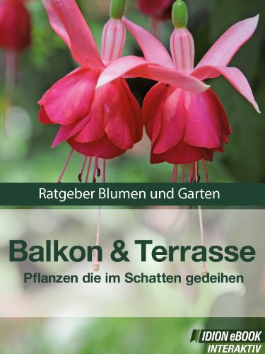 Balkon Terrasse Pflanzen Die Im Schatten Gedeihen Ratgeber