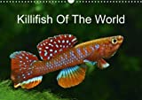 Killifish of the World 2018: Colourful Fish - Killifish from Africa and South America (Calvendo Nature)
