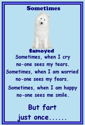 Perro Samoyedo flashsellerz - imanes de nevera - a veces: Amazon ...