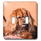3dRose Danita Delimont - Dogs - Cavalier King Charles Spaniel on pillow - Light Switch Covers - double toggle switch (lsp_258145_2)