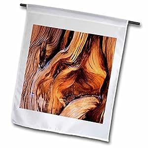 Danita Delimont - Forests - CA, Bristlecone pine cone, Inyo National Forest - US05 SSM0063 - Scott T. Smith - 12 x 18 inch Garden Flag (fl_88640_1)
