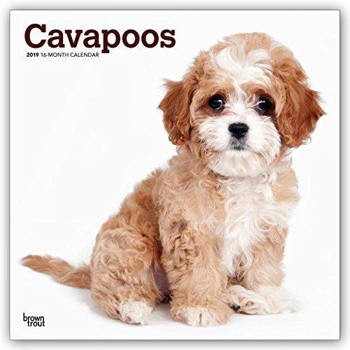 Cavapoos - Cavoodles 2019 - 18-Monatskalender: Original BrownTrout-Kalender, mit freier DogDays-App