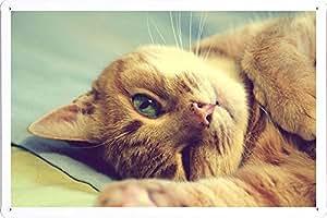 Metal cartel Cartel de chapa Hojalata sesión Cat Face Paw Playfully Lie 65486 Retro Vintage Pared Decoración by hamgaacaan (20x30cm)