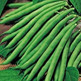 Suttons - Climbing French Bean Seeds - Cobra