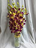 Orchid - Fresh Cut Flowers - Ten Stems of Dendrobium Sonia Tinted Yellow (Free Vase)