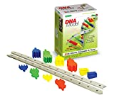 DNA Model - Build a biologically correct DNA puzzle