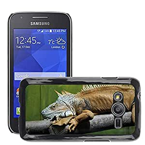 Cas Coq Case Cover // M00147208 Iguana verde Lagarto Kaltblut Reptile // Samsung Galaxy Ace4 / Galaxy Ace 4 LTE / SM-G313F