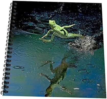 3dRose db_141685_1 Green Basilisk, Plumed Basilisk, Costa Rica Sa22 Amr0011 Andres Morya Hinojosa Drawing Book, 8