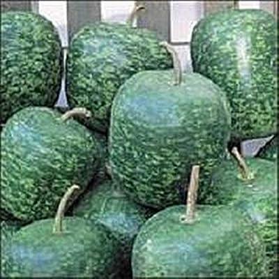 15 Seeds Apple Gourd AB053 : Garden & Outdoor