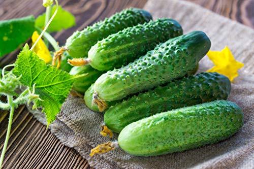 Seeds Cucumber Lyalyuk Mini Pickling Vegetable Organic Heirloom Ukraine