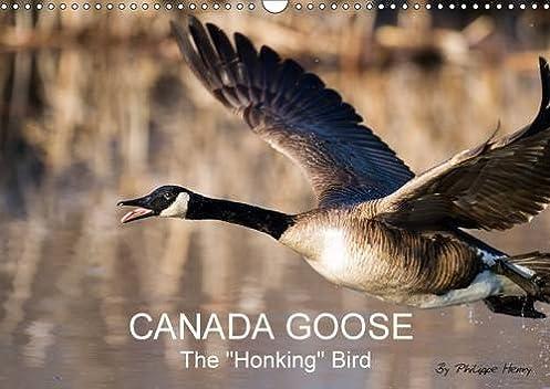 Buy Canada Goose/UK-Version 2017: The Honking Bird (Calvendo Animals) Book Online at Low Prices in India   Canada Goose/UK-Version 2017: The Honking Bird ...