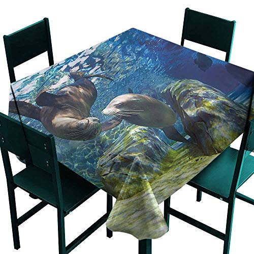 DONEECKL Washable Tablecloth Sea Animals Playful Sea Lions Soft and Smooth Surface W60 xL60]()