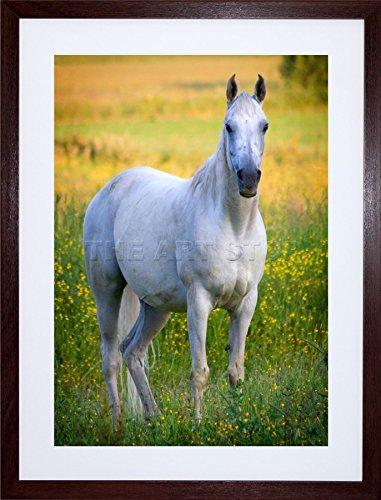 9X7  White Horse Stallion Buttercup Green Field Framed Art Print F97x1921