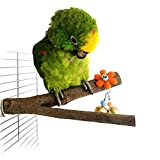 Bwogue Bird Perch,9.8'' Nature Wood Stand Branch With Two Bell Toy For Parrots Cages Toy