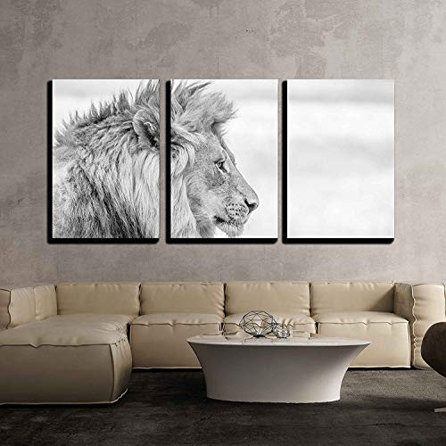 Side Profile of a Lion in Black and White in The Kruger National Park South Africa x3 Panels