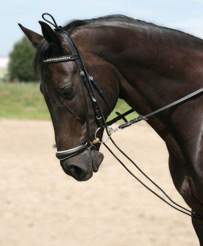 PFIFF Hilfszügel Halsverlängerer, schwarz, Warmblut/Full, 004417-60-Full