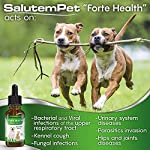 Natural ANTIBIOTICS for Dogs / ANTIBIOTICS Alternative for Pets/ Kennel Cough Medicine for Dogs / UTI Treatment / ANTIBIOTICS for Cats 12