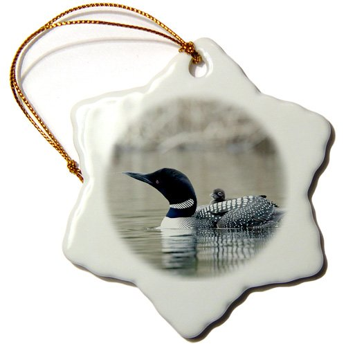 Porcelain Common Loon with Chick-Cn02 Csl0062-Charles Sleicher-Snowflake Ornament 3-Inch 3dRose ORN/_70368/_1 British Columbia