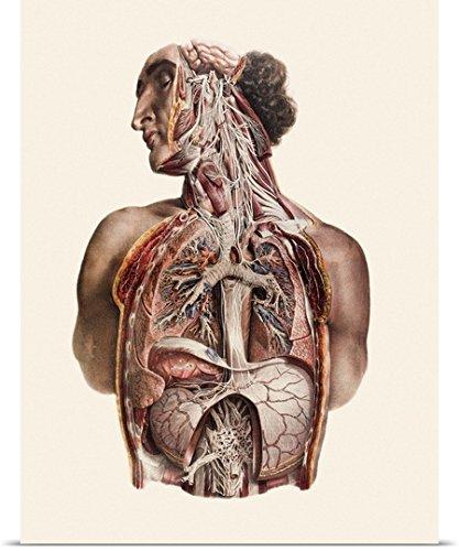 top 5 best cranial nerves poster,sale 2017,Top 5 Best cranial nerves poster for sale 2017,