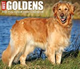 Just Goldens 2021 Box Calendar (Dog Breed Calendar)