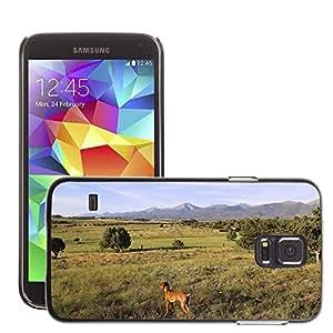 Super Stella Slim PC Hard Case Cover Skin Armor Shell Protection // M00105685 Dog Colorado Countryside Vizsla // Samsung Galaxy S5 S V SV i9600 (Not Fits S5 ACTIVE)