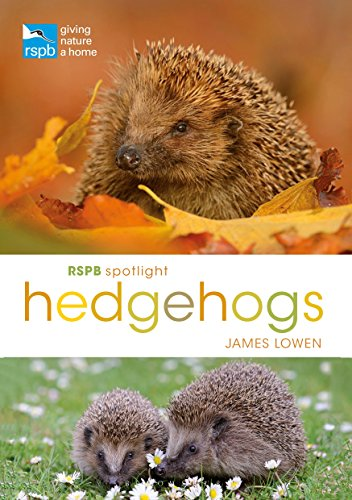 RSPB Spotlight Hedgehogs
