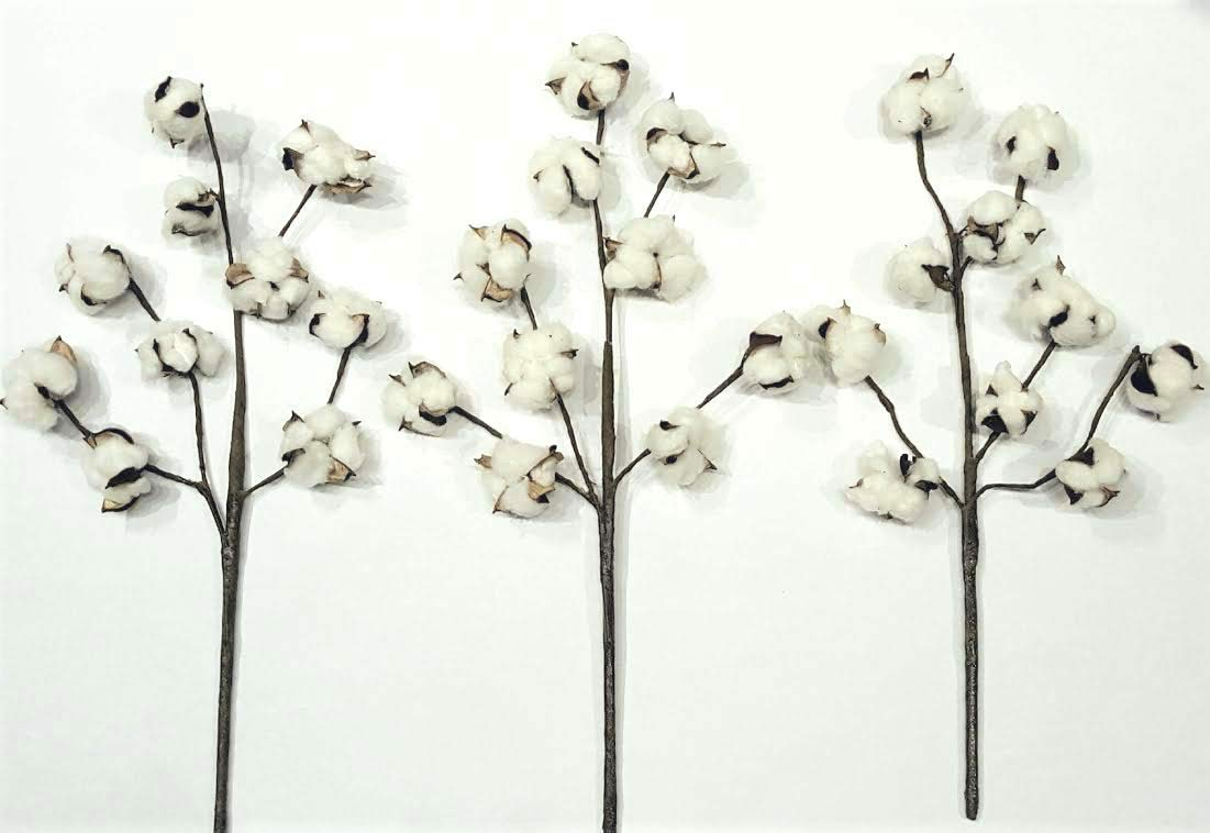 Silvercloud Trading Co.. Cotton Stems - 3 Stems/Pack - 10 Cotton Buds/Stem - 20'' Tall - Farmhouse Style Floral Display Filler - Rustic Wedding Centerpiece by Silvercloud Trading Co.