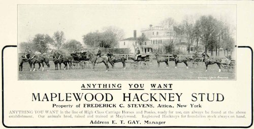 1903 Ad Maplewood Hackney Stud Carriage Horses Ponies Equestrian Animal Breeder - Original Print Ad from PeriodPaper LLC-Collectible Original Print Archive