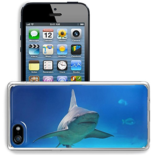MSD Apple iPhone 5/iPhone 5S/iPhone SE Clear case Soft TPU Rubber Silicone Bumper Snap Cases iPhone5/5S IMAGE 24458304 Shark under water big predator fish