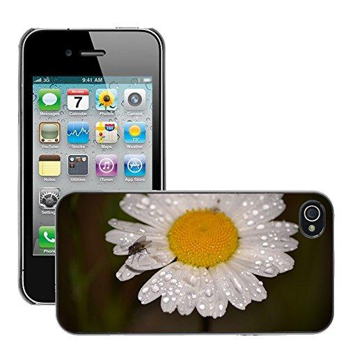 Bild Hart Handy Schwarz Schutz Case Cover Schale Etui // M00135410 Weißes Gänseblümchen Blumen Insekt // Apple iPhone 4 4S 4G