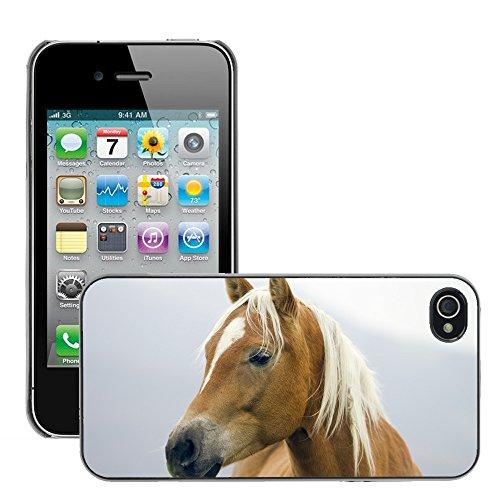 Hülle Case Schutzhülle Cover Premium Case // V00002192 Pferd // Apple iPhone 4 4S 4G