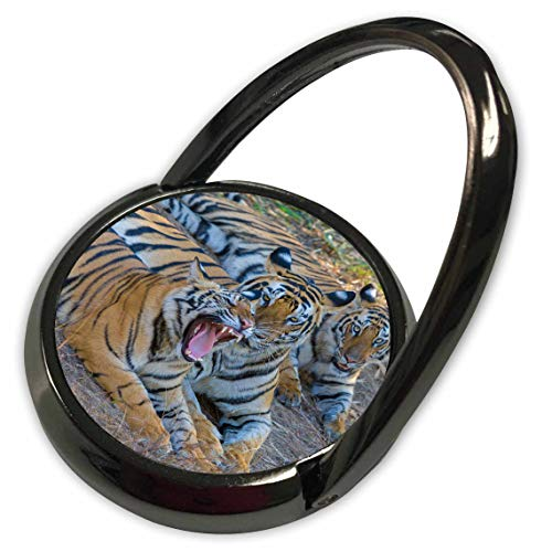 - 3dRose Danita Delimont - Tigers - Bengal Tigers, Bandhavgarh National Park, India - Phone Ring (phr_312704_1)