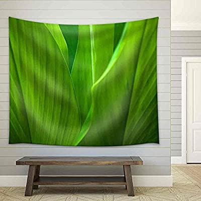 Premium Creation, Delightful Technique, Green Leaf Background Abstract of Nature Fabric Wall