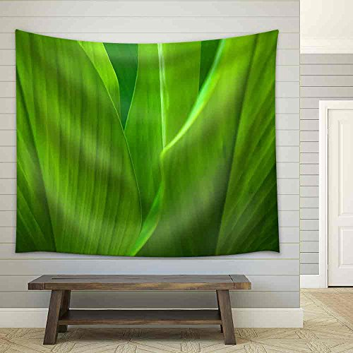 Green Leaf Background Abstract of Nature Fabric Wall