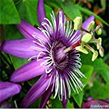 AGROBITS Rare Flower Seeds Passiflora Seeds Fruit Tree Seeds Passion Fruit Seeds Home Garden Plant 20pcs: 2