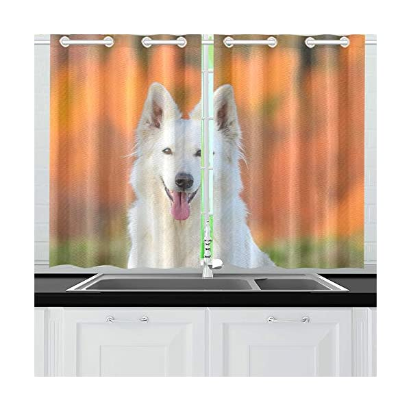 AIKENING White Swiss Shepherd Dog Autumn Kitchen Curtains Window Curtain Tiers for Café, Bath, Laundry, Living Room Bedroom 26 X 39 Inch 2 Pieces 1