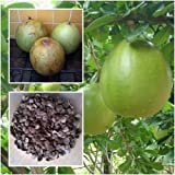 Crescentia Cujete Seeds, Calabash Tree Wild Calabash, Tropical Plant Seeds