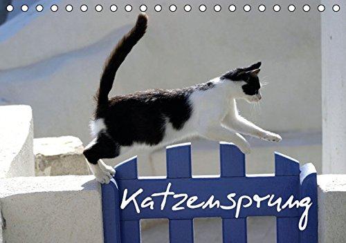katzensprung-tischkalender-2016-din-a5-quer-foto-katzen-kalender-zum-trumen-geburtstagskalender-14-seiten-calvendo-tiere