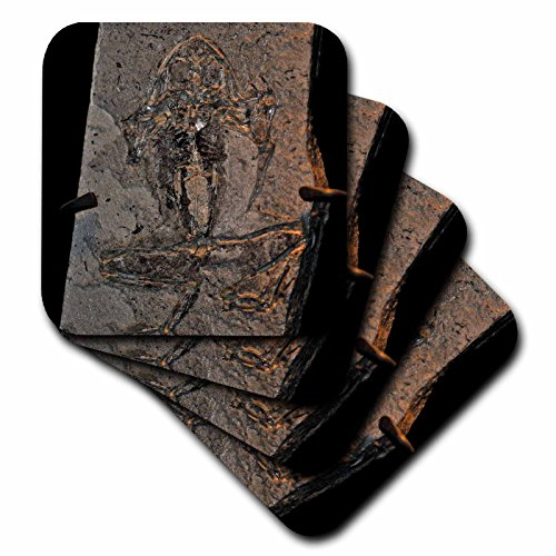3dRose cst_16708_3 Pueyoi Frog Fossil from The Miocen Libros, Teruel, Aragon, Spain-Ceramic Tile Coasters, Set of 4 by 3dRose