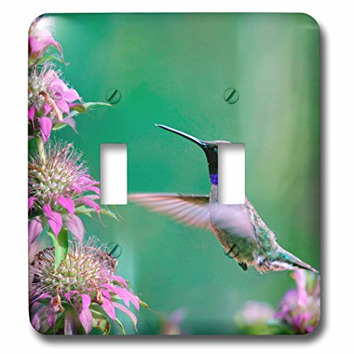 3dRose Danita Delimont - Hummingbirds - Black-chinned Hummingbird drinking nectar at a bee balm, Texas, USA.   - Light Switch Covers - double toggle switch (lsp_260182_2)