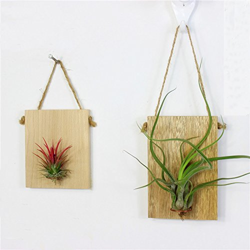 Candyqueen 1Pcs Air Plant Holder Hanging Planter Creative Wooden Wall Holder Home Decor (M)