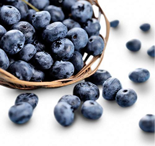 Organic Jewel Blueberry 300+ Seeds + 1 Free Plant Markers