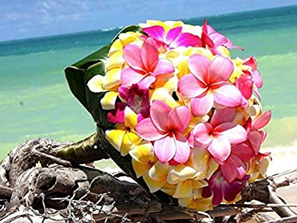 Amazoncom Plumeria Garland Of Exotic Tropical Flowers On White